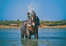 Elephant spraying water to people during riding Stock Images