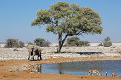Elephant and springbok antelopes Royalty Free Stock Photos