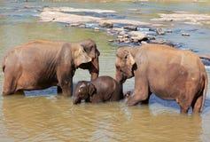 Elephant on Sri Lanka Royalty Free Stock Photography