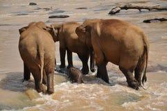 Elephant in Sri Lanka Stock Photo