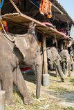 Elephant stable in Ayuthaya, Thailand Royalty Free Stock Photo