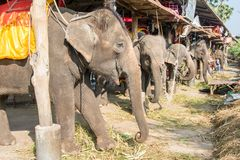 Elephant stable in Ayuthaya, Thailand stock image