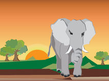 The elephant is stand alone in the forest Stock Image