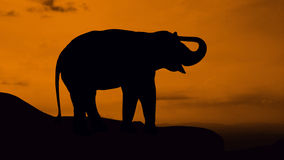 Elephant stand on mountain Stock Photos