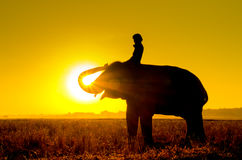 Elephant Standing In A Rice Field With The Mahout Royalty Free Stock Photography