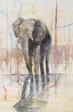 Elephant standing in a lake. Stock Photos