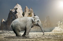 Elephant standing in rocky terrain Royalty Free Stock Photos