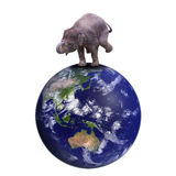 Elephant stands on the earth Royalty Free Stock Photography