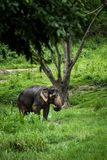Elephant stands in the middle of the forest Royalty Free Stock Images