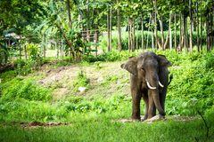 Elephant stands in the middle of the forest Stock Photo