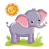 Elephant stands on the sunny meadow. Stock Image