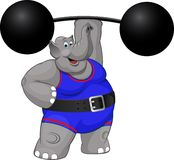 Elephant strongman Royalty Free Stock Photo