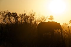 Elephant in sun Stock Images