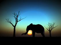 Elephant Sunrise 12 Royalty Free Stock Images