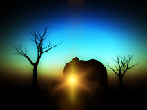 Elephant Sunrise 14. An image of an elephant silhouette with a African sky background Stock Image