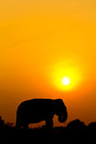 Elephant and sunset Stock Images