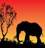 Elephant Sunset. Illustration of an Elephant silhouette against a sunset royalty free illustration