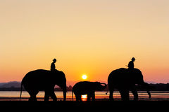 Elephant with sunset at the beach twilight time Stock Image