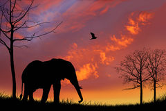 Elephant and sunset graphic Stock Photo