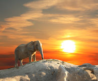 Elephant at sunset Stock Photography