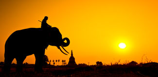 Elephant and Sunset with sunset scene Royalty Free Stock Images