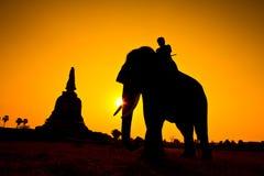 Elephant and Sunset with sunset scene Royalty Free Stock Image