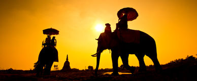 Elephant and Sunset with sunset scene stock photography