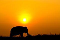 Elephant and Sunset with sunset scene Stock Photo