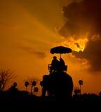 Elephant and sunset Royalty Free Stock Photos