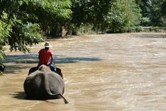 Elephant Swiming. An elephant in thailand going for a swim with his guide Royalty Free Stock Photos
