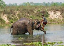 Elephant swimming Royalty Free Stock Photo