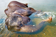 Elephant swimming Royalty Free Stock Images