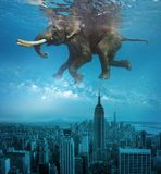 Elephant swims over the city and buildings in the city. stock photography