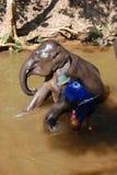 Elephant Take Shower Royalty Free Stock Photography