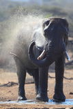 Elephant taking a bath Stock Photos