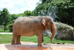 Elephant Taking a Bath Royalty Free Stock Photos