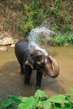Elephant taking a shower Royalty Free Stock Photo