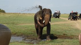 Elephant taking a shower during safari stock photo