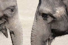 Elephant talk Stock Image