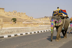Elephant Taxi Stock Images
