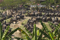 Elephant thai day Stock Image