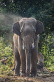 Elephant thai Stock Photography