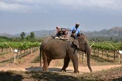Elephant thai Royalty Free Stock Photo