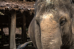 Elephant. In Thailand Asia. Travel Photo Royalty Free Stock Photography