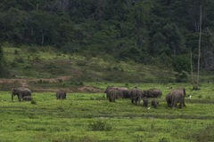 Elephant in thailand Stock Photos