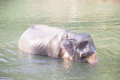 Elephant  thailand bathing in the river Royalty Free Stock Photo