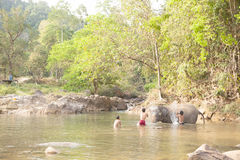 Elephant  thailand bathing in the river Royalty Free Stock Photography