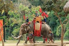 Elephant Thailand ,Elephant ,animal Stock Images