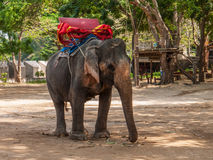 Elephant, Thailand Stock Images
