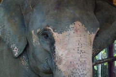 Elephant. Thailand. Royalty Free Stock Image